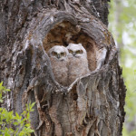 "Photographer Tammy Coy ""Owls from the heart"""
